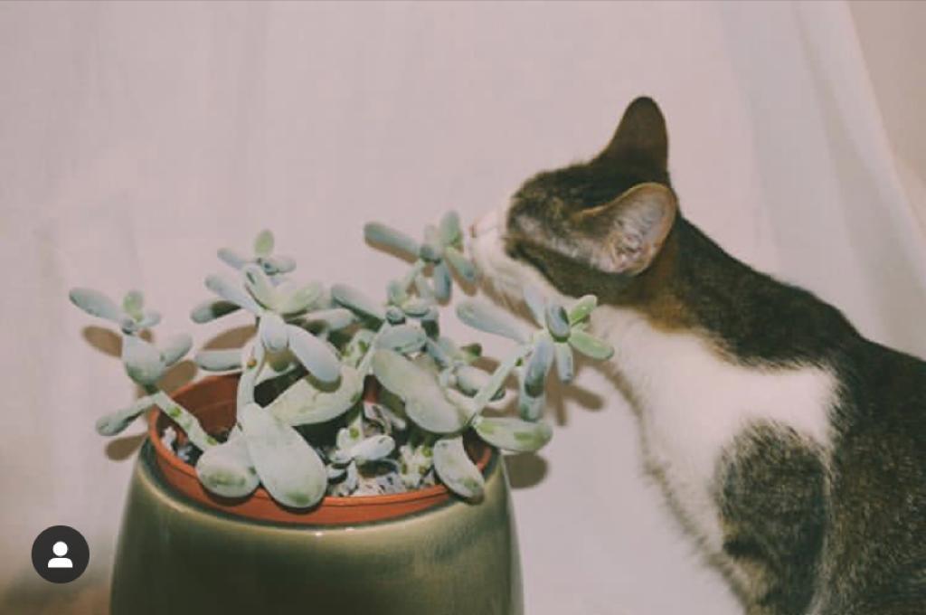 Dieren vs. planten